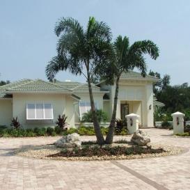 palm_tree_landscape