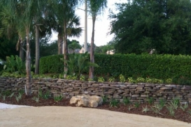 retaining_wall_with_palm