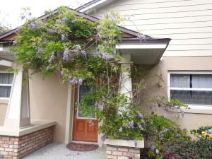 valdyke wisteria