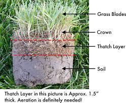 Thatch grass image